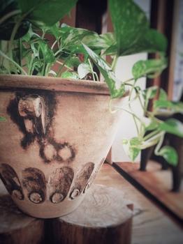 植木鉢と植物