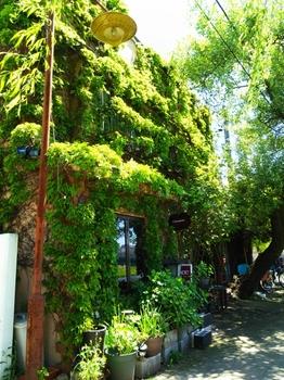 蔦に覆われた喫茶店
