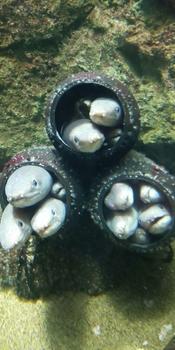 うみの杜水族館アナゴ団地