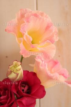 八重咲のトルコキキョウ