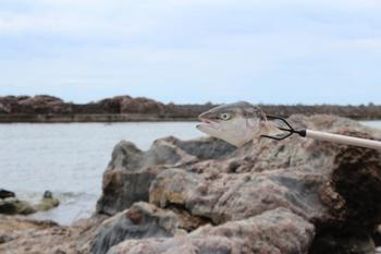 魚突き・お頭