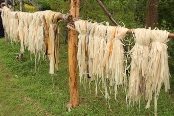 シナノキ(マダ)の繊維を乾かす