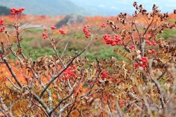 三石山山頂の紅葉