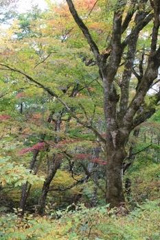 黒森山の紅葉