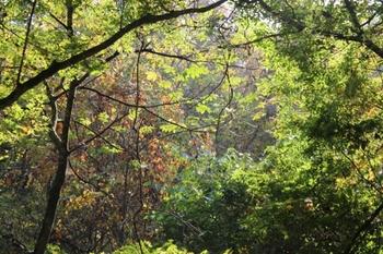 黒森山の自然