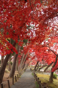 中央公民館の紅葉2016